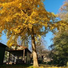 camping-nature-arbre